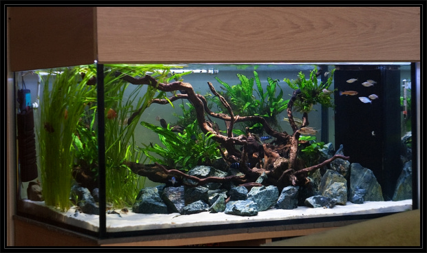 5kg Green Angel Aquarium Rock Stone Premium Decoration 100 Natural Idal Fof Aquascaping Malawi Cichlids Fish Tank